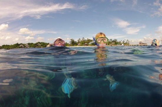 Wakatobi Dive Resort: Snorkeling