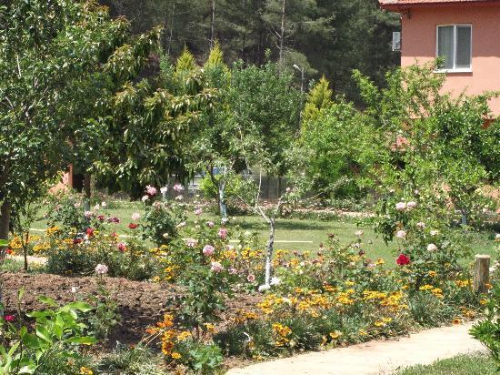 Dalya Life: Stunning gardens