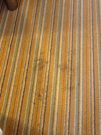 Hilton Garden Inn Lake Buena Vista/Orlando: carpet in room