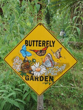 Montegrotto Terme, Italien: Butterfly Crossing!