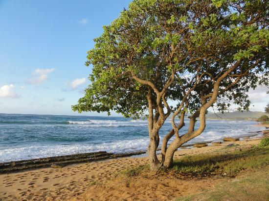 Kauai Coast Resort at the Beachboy: Beach