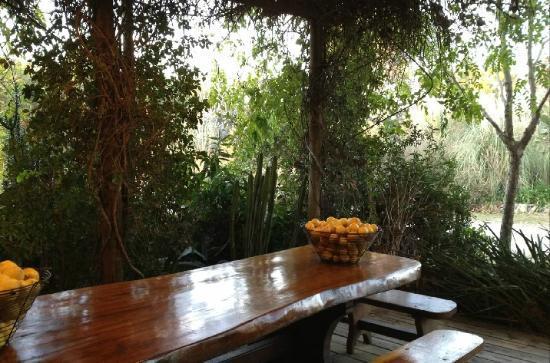 La Casa de los Limoneros: bowls of lemon