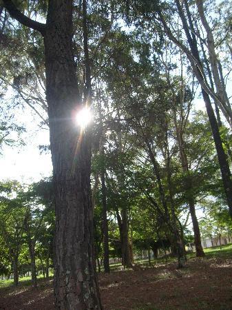Uberlândia, MG: Zoológico, parque infantil e uma natureza exuberante. Parque do Sabiá - Uberl