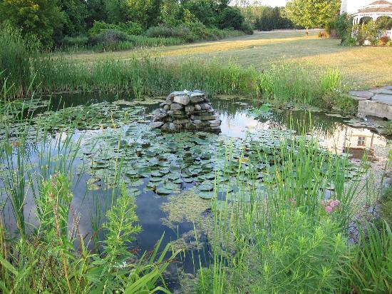لا توريل ريزورت آند سبا: Lovely frog and fish pond 