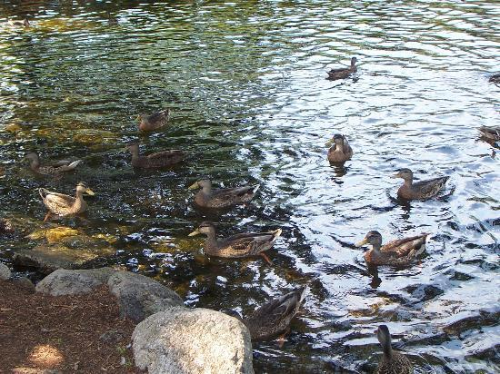 Woodwards Resort & Inn: Duck Pond