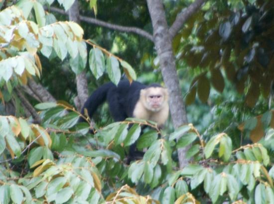 Paradise Breezes : A monkey in the trees nearby