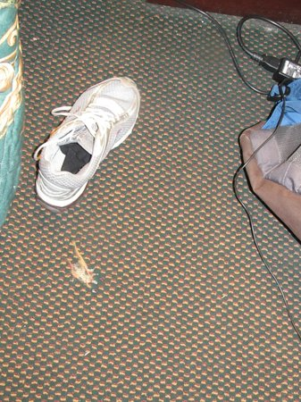 Econo Lodge and Suites North Syracuse:                                     Hole in carpet