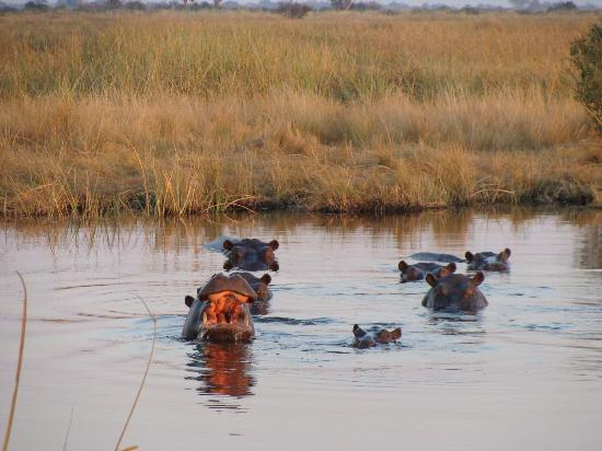Wilderness Safaris Kings Pool Camp: Waking Up Early
