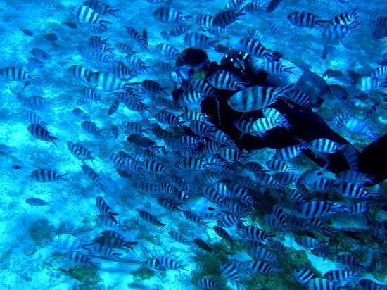 Constance Belle Mare Plage: Diving