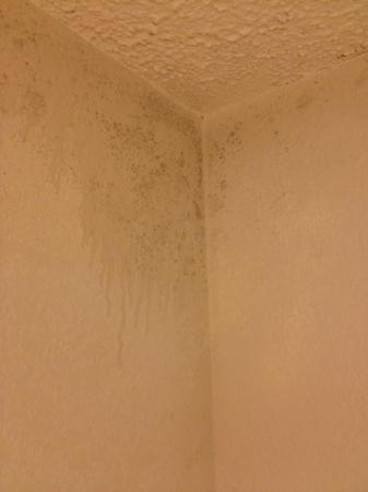 La Quinta Inn Chattanooga / Hamilton Place: mold in the bathroom