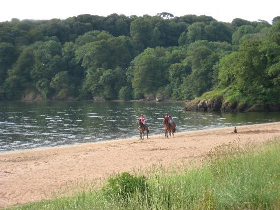 Joyce's Ireland Hiking Tours: Woodstown Beach, County Waterford