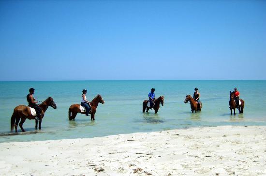 Royal Carriage Club Riding School: Promenade Flamingo Island