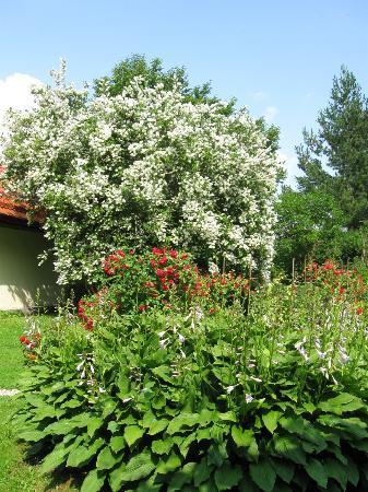 Sunny Hill Bed & Breakfast: Sauleskalni garden
