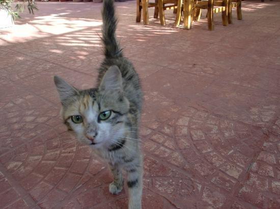 Urgup Inn Cave Hotel: 猫
