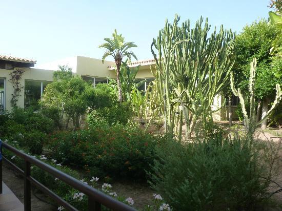 Sirenis Hotel Club Aura : coin de verdure patio