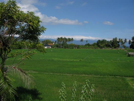 Bali Paradise Hotel Boutique Resort: Rice fields