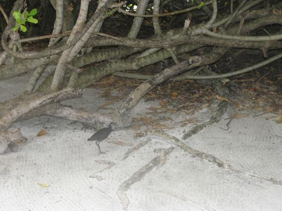 Velassaru Maldives : *