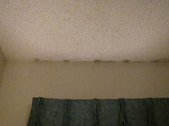 Econo Lodge : Very strong moldy odor. I noticed mold/mildew above the window - possible ceiling leak?