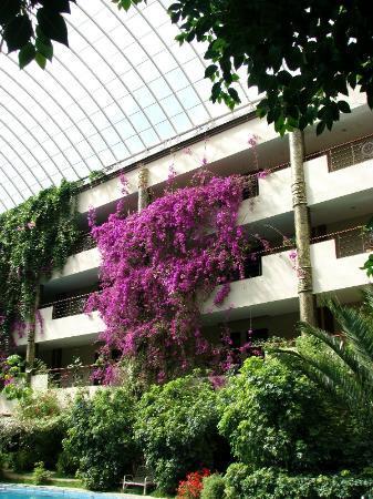 Paradise Hotel: Lovely plants