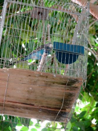 Paradise Hotel: Parakeet