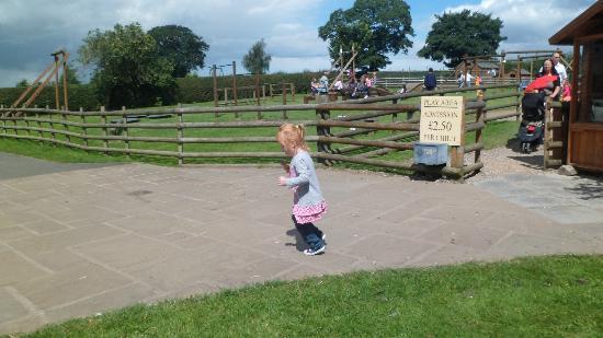 Wheelock Hall Farm: outside the play area