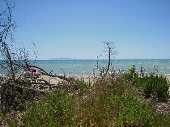 Agriturismo San Gabriele: la spiaggia di marina alberese (vista a ridosso della pineta)