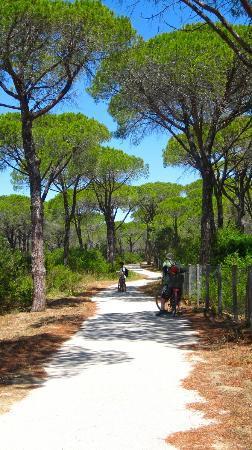 Agriturismo San Gabriele: un pezzo della pista ciclabile nel parco dell'uccellina