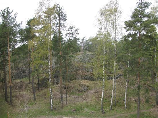 Hellsten Espoo: Вид из окна 1