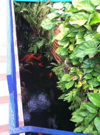 Garden Island Inn Koi Pond