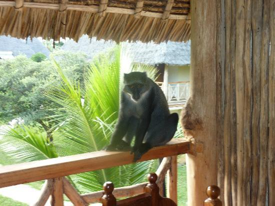 Neptune Palm Beach Boutique Resort & Spa All Inclusive: Hello Monkey