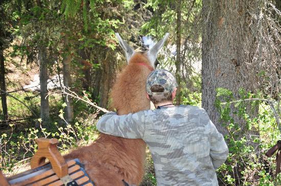 Jackson Hole Llamas: Friendly llama