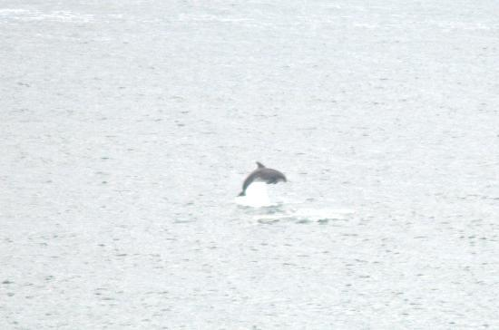 Atlantic Heights: One of the dolphins we spotted from our room (using 300mm lens in case you're interested)