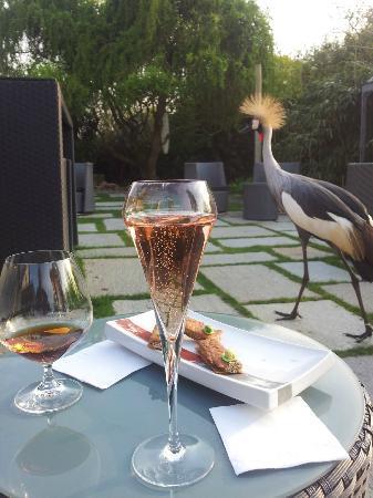 La Mare aux Oiseaux: la grue mâle aime le champagne!