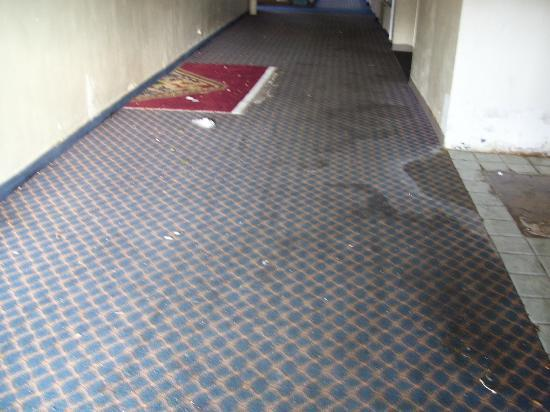 The Lodge Hotel & Banquets St. Louis Airport: nasty floors