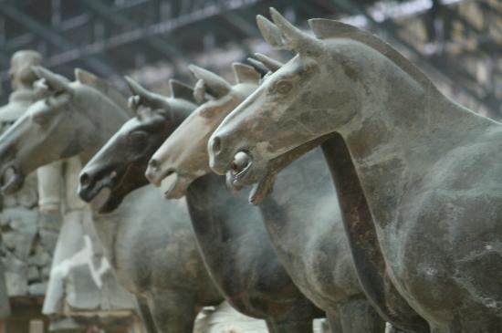 Each Warrior is different - Picture of The Museum of Qin ...  Each Warrior is...