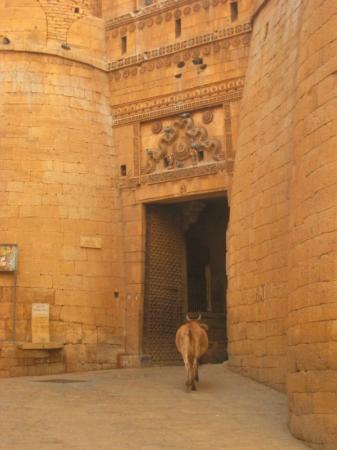 Surya Gate(d)
