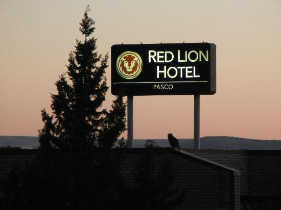 Red Lion Hotel Pasco: Night owl patrolling the Pasco Red Lion.