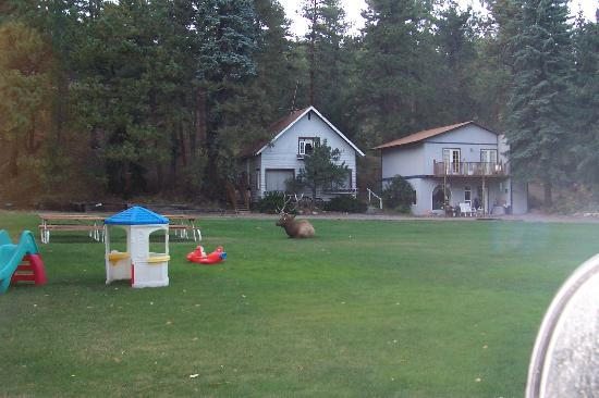 Bauers Spruce Island Chalets: The Blue Spruce Chalet and some of the toddler toys.