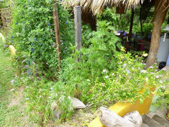 Empalme a Las Playas: Garden area