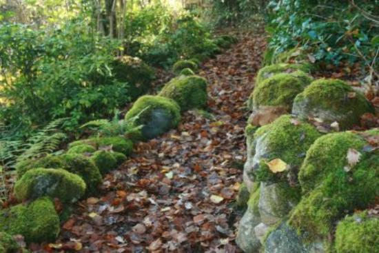 Abriachan Nurseries - The Garden On Loch Ness: Mossy Woodland Paths