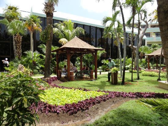 Foto de sol palmeras varadero jardines del hotel for Jardines con palmeras
