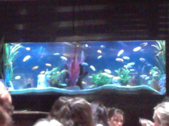 Aquarium Picture Of Cheddar 39 S Little Rock Tripadvisor