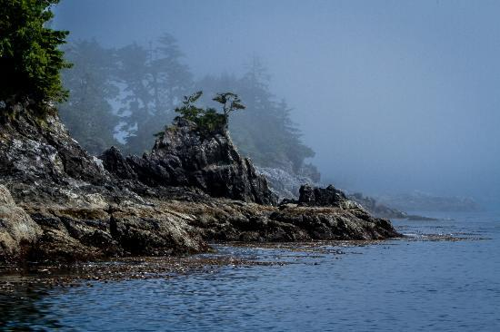 Ucluelet, Canada: The scenery is amazingly beautiful.