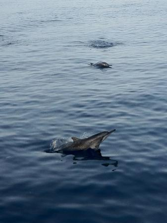 The Residence Maldives: Dolphine cruise