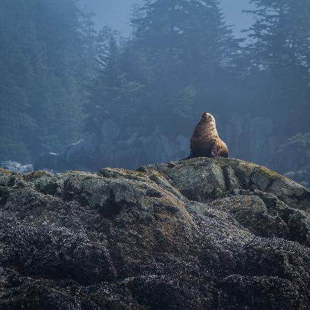 Archipelago Wildlife Cruises : A Rock Star.
