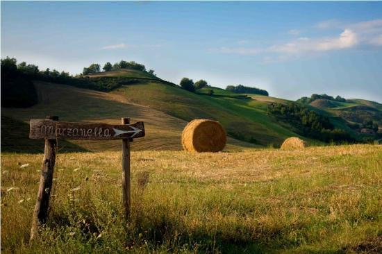 Agriturismo Marzanella: Panorama