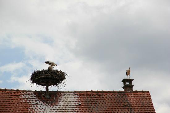 Hotel Le Menestrel: image d'Alsace : les cigognes