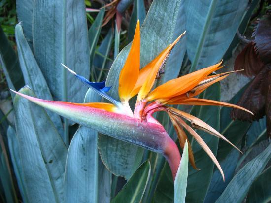Les Kreol'Inns: Fleurs du jardin
