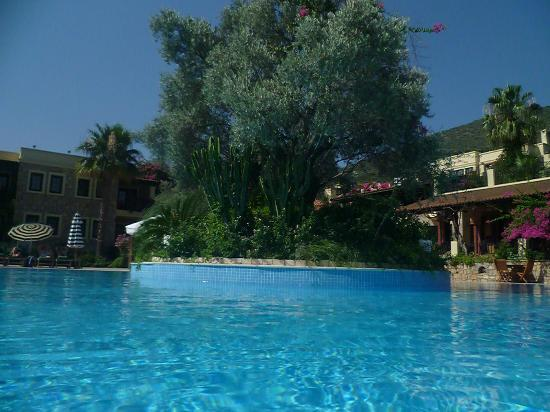 Hotel Zeytinada: Pool