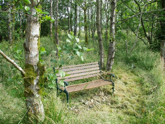 Beili Helyg Guest House: A bench to rest on while exploring the wood